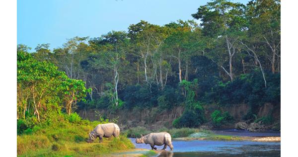 Rhinocéros unicorne dans Parc National de Chitwan – Népal