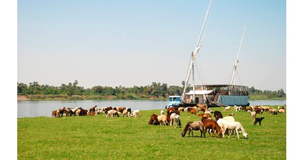 Sur les rives du Nil – Egypte