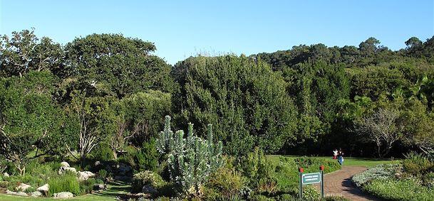voyage jardins de kirstenbosch afrique du sud comptoir des voyages agence voyage jardins de. Black Bedroom Furniture Sets. Home Design Ideas