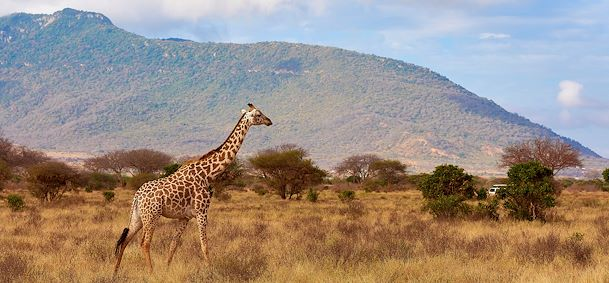 Photo Safari Tsavo