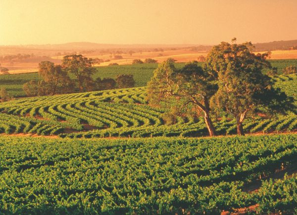 discover the secrets of south australia