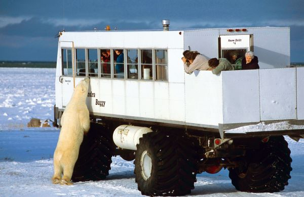 voyage d couverte ours polaires baie d 39 hudson voyage canada comptoir des voyages. Black Bedroom Furniture Sets. Home Design Ideas