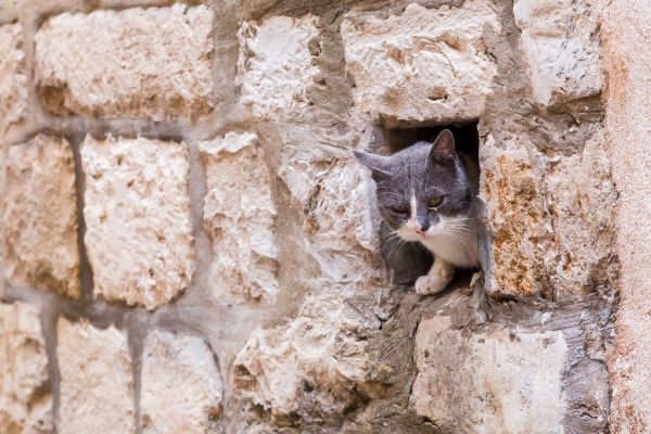 Chat dans les rues de Dubrovnik - Croatie - Jason Wells/stock.adobe.com