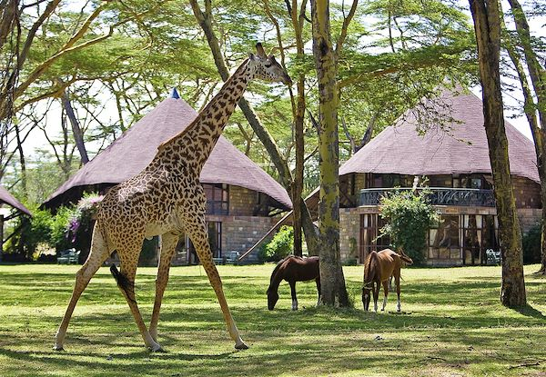 Lake Naivasha Sopa Lodge - Lac Naivasha - Kenya - Lake Naivasha Sopa Lodge