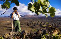Sous les volcans, la vigne - Espagne -