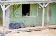 Cachette des zil's - Seychelles -