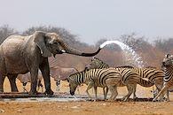 Le Kruger, que du bonheur - Afrique du Sud -
