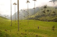 Vallée de Cocora - Colombie - Laurent Granier