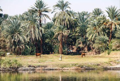 Scène de vie égyptienne - Stéphanie Battet