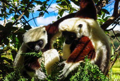 Lemur's Park - Madagascar - Yann Guiguen