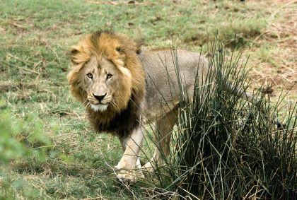 Parc Kruger - Afrique du Sud - C Sargent /  Dana Allen
